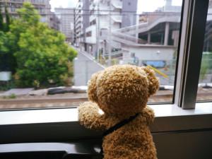 車窓を眺めるろじねこさん