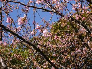 2015022102_disney_flower