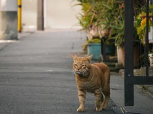 2015022204_cat