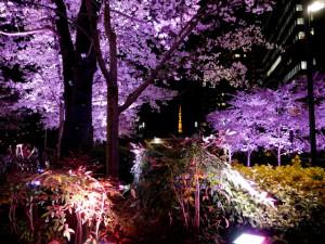 2015033104_sakura