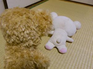 2016120616_kumamoto